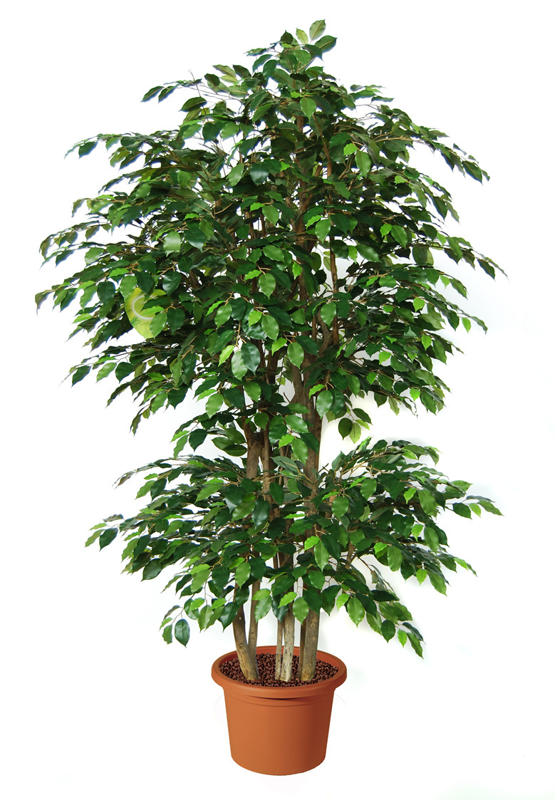 Great Artificial Plant Ficus Benjamin Boschetto H9308