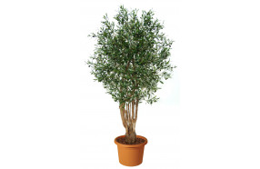 artificial-plant-olive-malabar-h9304